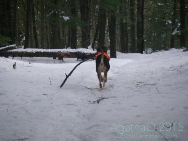 Gotta go take this stick….