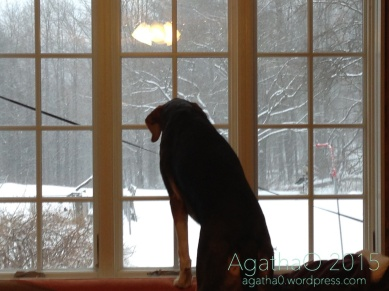I think I would like to be out there to find out what that stuff is coming down from the sky. Plus of course see about those shadows moving along the snow by the bird feeder. See whether they wil be there today. Plus thos little squirrel guys I keep trying to play with. Yup, sure looks purdy…