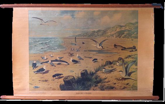 Aan het strand (At the Beach) my other favorite Koekkoek watercolor fro the same series, Dieren in hun Omgeving .