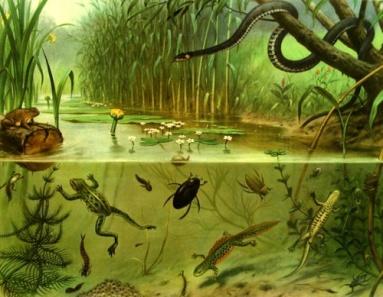 Sloot en Plas (Pond and Stream), M.A. Koekkoek's (1873-1944) most well-known illustration, ca. 1910-1918